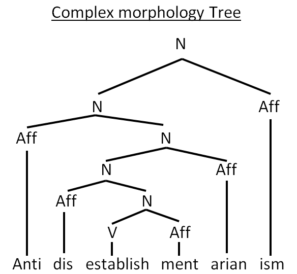 COMPLEX MORPHOLOGY TREE