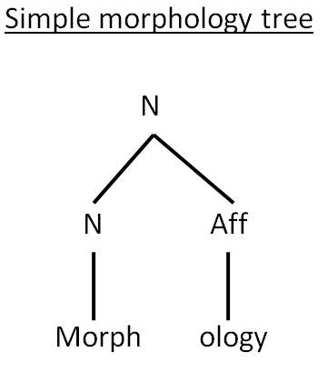 SIMPLE MORPHOLOGY TREE